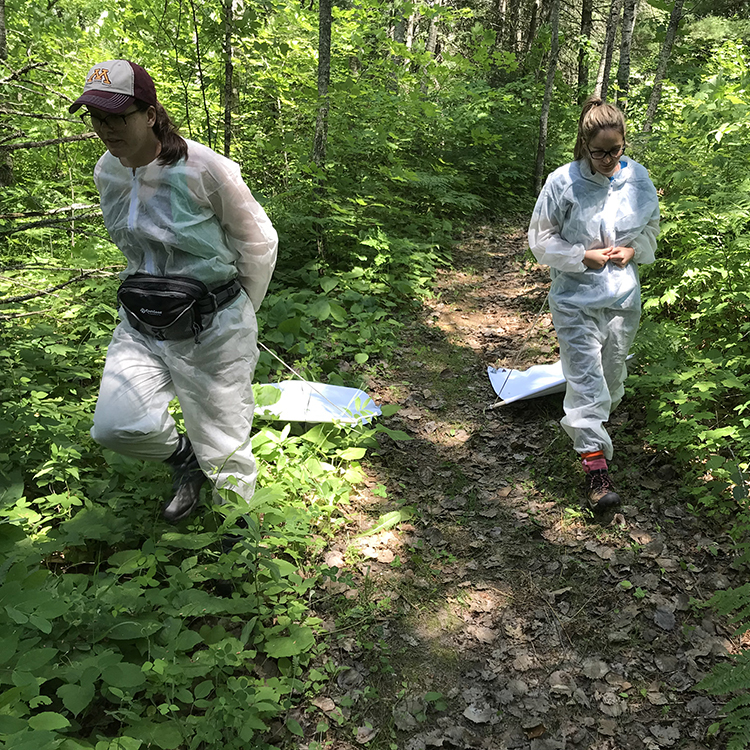Students collecting samples in the woods
