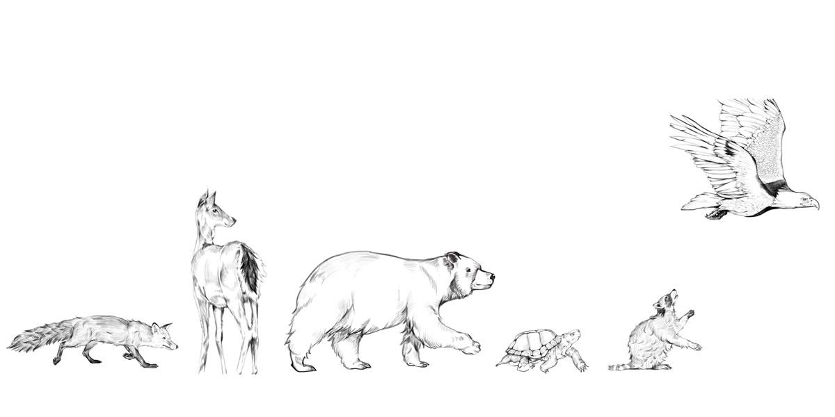 Illustration of forest wildlife