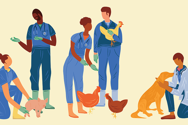 Illustration of vet students with animals