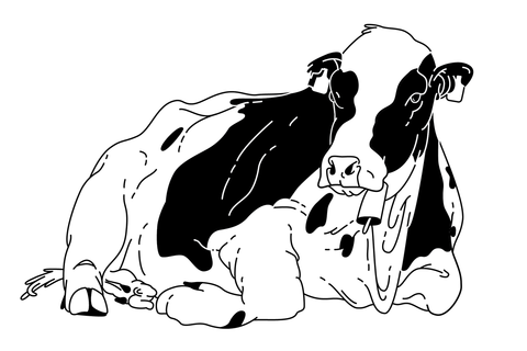 Cow laying down