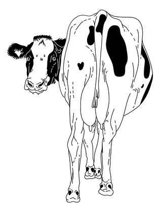 Image of cow
